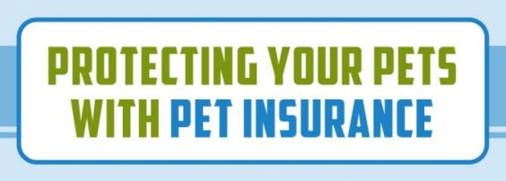 Infographic: Pet Insurance in Hong Kong