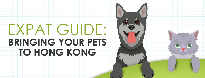 Expat Guide: Flying Your Pets to Hong Kong